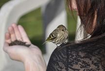 Bird Watching Favs