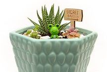 Plant Love / Terrariums, miniature gardens, indoor plants, bonsai trees & succulents.  IMPORTANT: 1. Please, respect copyrights, make sure to link to the original articles. 2. For every pin from your own site repin two others. 3. Do not pin duplicates. 4. Take a moment to read all of the rules before starting to pin to our board: http://www.coffeeandvanilla.com/collaboration/  Thank you!