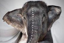 elephant awesomeness / by April Dykman