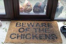 Chicks / by Anna