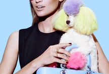 Dogs | Editorial | High Fashion / Dedicated to the dogs of fashion