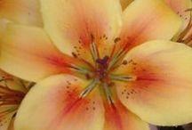 Fantastic Flora / A floribunda of flowers, trees and all things botanical / by Deep Glade Philippa Dozin