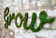 Moss Gardens / Moss types, how to grow it, and gardening ideas / by Tanya ♡ Lovely Greens