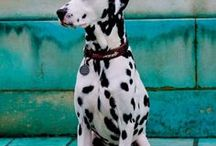 Kutya / A cuki kutyusokról szól ez a tábla