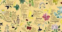 Aromatherapy and Herbs / herbs, aromatherapy and home remedies