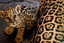 Leapin' Leopards!  >*.*< / by Donna Messer