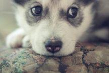 cute / by Diana Weaver