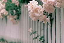 Gardens / by Brenda Willett