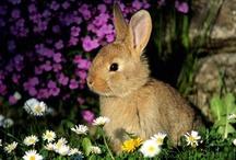 Bunnies Make Me Happy / by Brooke Woodard