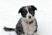 #PuppiesAreHappyness!!! / by Marissa Mahr