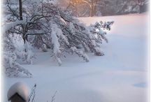 {Winter's Beauty}