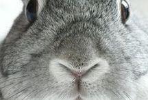Easter & Bunnies
