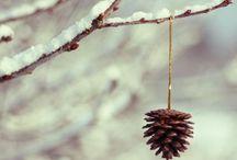 frosts.festivity.fairylights / winter merriment