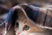 {Meow}
