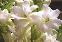 Le Jardin des Sens | Scented Garden / the scented garden + botanical perfume making.