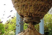 Les Abeilles ~ Apiary / adventures in beekeeping