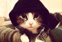 cats =^..^= makes me happy!