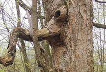 Amazing trees and strange plants / Made by Nature
