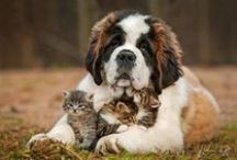 Moms / Mothers in the animals world