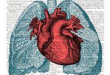 Anatomía surrealista