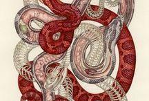 § Snake §