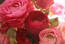 Flowers, Flowers, Flowers / by Sarah Jones