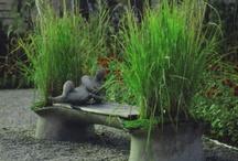 The Garden / by Josie White
