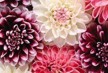 filed / nature / florals, succulents, fleuri, fleurs, flower, plants, living things / by c h