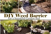 Gardening / Gardening tips, tricks, and hints on Pinterest. Learn about plating techniques, and ideas with pins from this board.