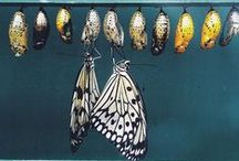 Sensational Butterflies / Photos of the butterflies and moths in our sensational exhibition, open until 13 September 2015. Tweet or instagram your #SensationalButterflies photos and you could win a prize. To find out how and to read the Ts and Cs visit http://www.nhm.ac.uk/butterflies-monthly-draw / by Natural History Museum, London