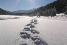 Outdoors Fun / Enjoying the great outdoors, including camping, hiking & snowshoeing. / by Linda Hughes