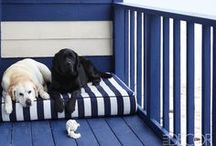 Outdoor Design with dogs