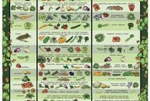 Vegan foods / by Eryn Hughes