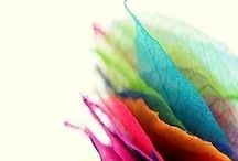 {color} / by  {ChristOff}