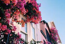 Preciously Pink