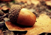 For the Love of Fall... / by Monique Bonfiglio Doughty
