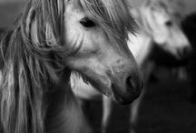Animals / be still my heart.
