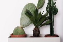 Plants / a little green to liven up your space