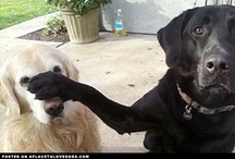 Dogs Are Funny... / Proof that dogs are the best animals. / by Monique Bonfiglio Doughty