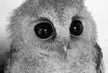 búhos / most fantastic animal on earth