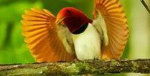 Ptaki / Skrzydlaci przyjaciele