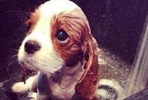 Squee! / Cute. Precious. Adorable. / by Gina Burpee
