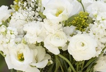 Flowers & Arrangements / by Miss Cassie