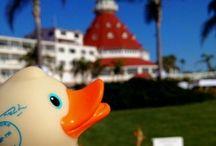 I Left My Heart In San Diego / by Judy Warner