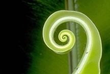 Spirals /  coiled, helical, corkscrew, curling, winding, twisting, whorled; technical voluted, helicoid, helicoidal.