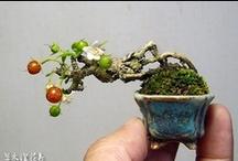 Plantas / by Illa Ly