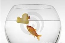 Aquariums / by Judy Warner