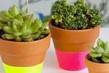 Garden & Patio Ideas