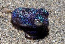 SQUID - CALAMAR / des squids aussi mignons que des chatons :)