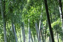 貝塚市木積の竹とたけのこ / 伝説の白たけのこが育つ泉州貝塚の木積の竹やぶとたけのこに関する画像集